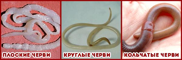 санацин против паразитов